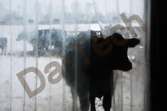 Perdea protectie adapost vaci