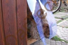 Protejarea unui caine cu perdea PVC